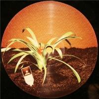 Martin Solveig - Sur La Terre (DJ Tools Limited Edition) (Album)