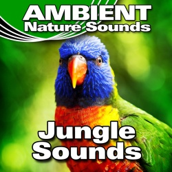 Ambient Nature Sounds - Mid-Morning Jungle Background With Close Insect Fly Bys